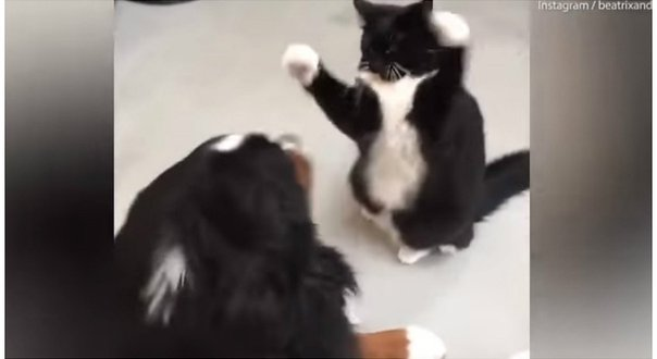 peleas de gato de hubnude - came and download