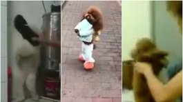 Facebook: perro caminando oculta una historia de maltrato animal (VIDEO)