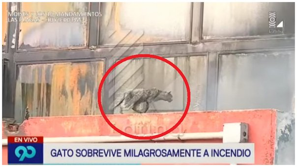 Las Malvinas: gatito atrapado en incendio conmociona YouTube (VIDEO)