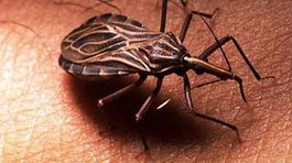 Chagas sigue latente en Arequipa