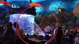 Disney World: Acuario de restaurante revienta y causa pánico
