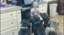 YouTube: Niña de cuatro años controla a 6 hambrientos pitbulls (VIDEO)