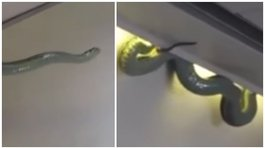 Impactante en YouTube: serpiente venenosa causa terror entre pasajeros de avión (VIDEO)