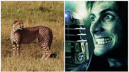"​Actor de ""Harry Potter"" graba el momento que fue atacado por un leopardo [VÍDEO]"