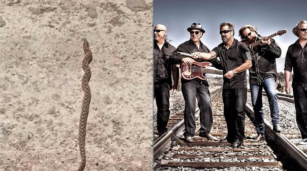 YouTube: serpiente baila a ritmo de rock (VIDEO)