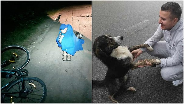 Perro callejero salva vida de ciclista y enternece Facebook (VIDEO)