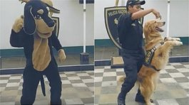 PNP crea video contra maltrato animal bajo el ritmo del 'Scooby Doo PaPa' (VIDEO)