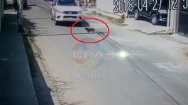 ​Serenos atropellan a perrito y no le prestan auxilio (VIDEO)