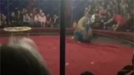 YouTube: leona de circo ataca salvajemente a una niña (VIDEO)