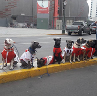Perú vs. Ecuador: Perritos con la camiseta de la Selección llegan al Estadio Nacional (VIDEO)