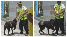 Denuncian maltrato animal por parte de sereno (VIDEO)